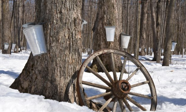 5 original sugar shacks in Quebec