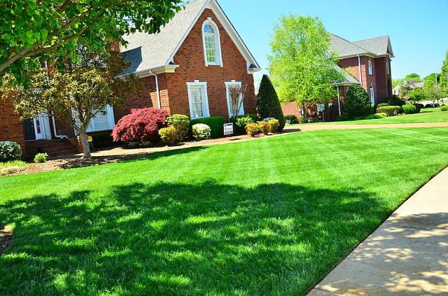 Grub Worms in Your Lawn This Spring