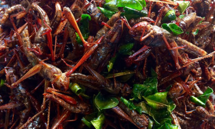 WHY EAT INSECTS?